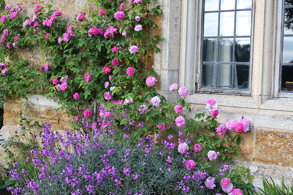 IMG_7391_flowers_window