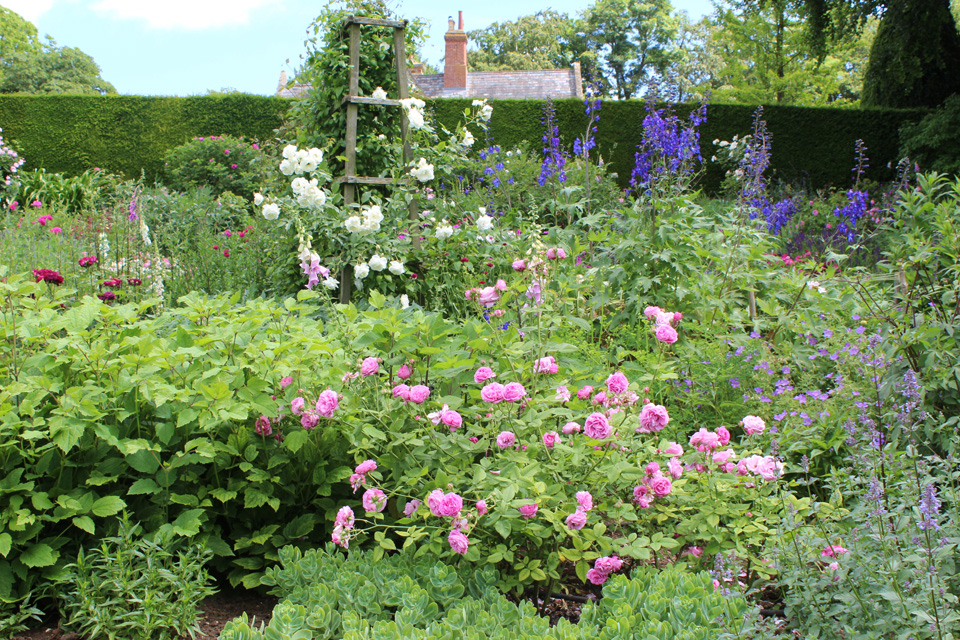 Roses in Midsummer Border
